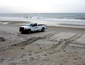 sea turtle crawl track