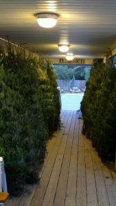 The smell of the holidays from newly arrived Christmas trees is prevalent on the Variety Store porch.