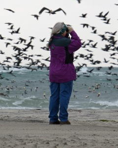Carol Pahl estimating the great number of Double-crested Cormorants on Ocracoke on a Christmas Bird Count.