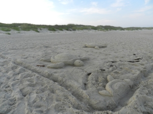 A sand sculpture depicting turtles hatching