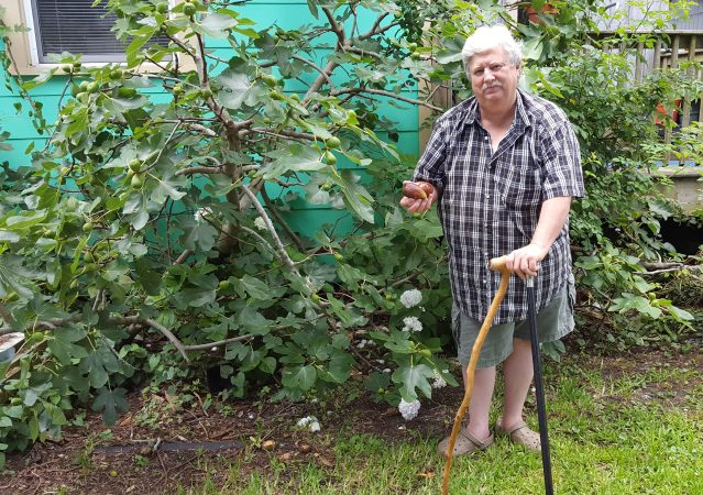 Chester Lynn with a pound fig outside his home on Back Road where he also sells fig trees. Photo: D. Mickey