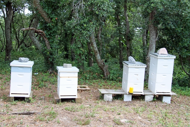 Honey bees on Ocracoke. Photo by P. Vankevich